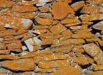 Licheni su un muro chjè ross